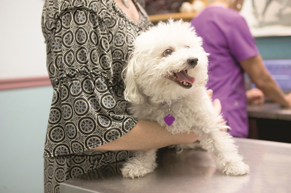 TCC partners with Valley shelters to promote pet adoptions